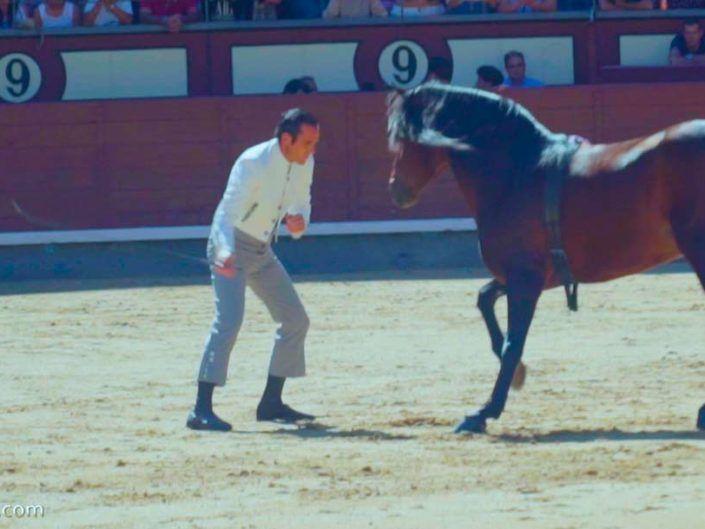 Bonito caballo PRE Bailando